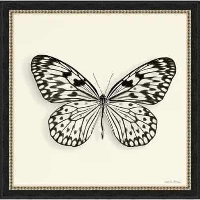 Trends+'Butterfly+V+BW'+Framed+Graphic+Art
